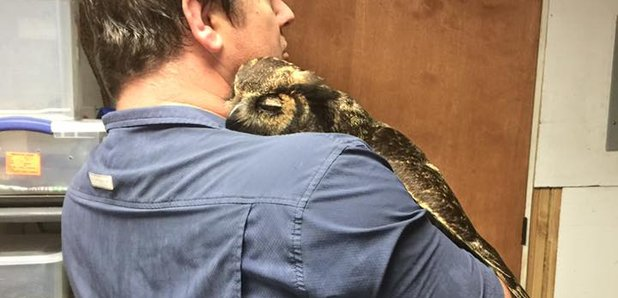Owl hugs man
