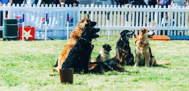 DogFest Article